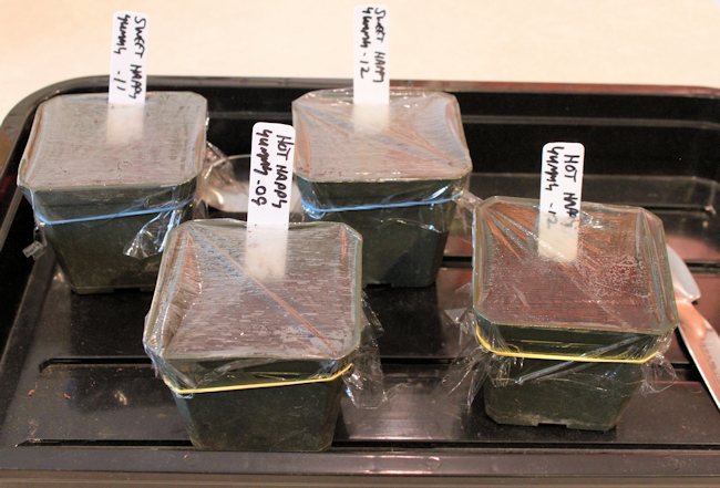 homemade mini greenhouse containers
