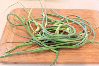 some of the 2013 garlic scapes