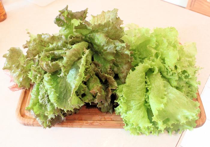 Red Sails and Simpson Elite lettuces