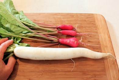 Shunkyo and April Cross radishes