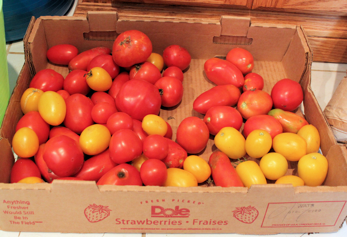 box of tomatoes for sauce