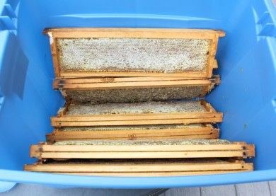 honey frames in big storage container