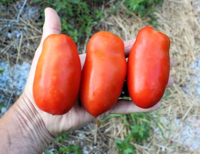 Super Marzano paste tomatoes