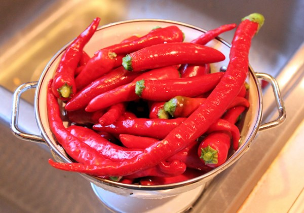 hot peppers for fermented hot sauce