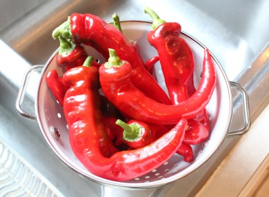 harvest of Jimmy Nardello peppers