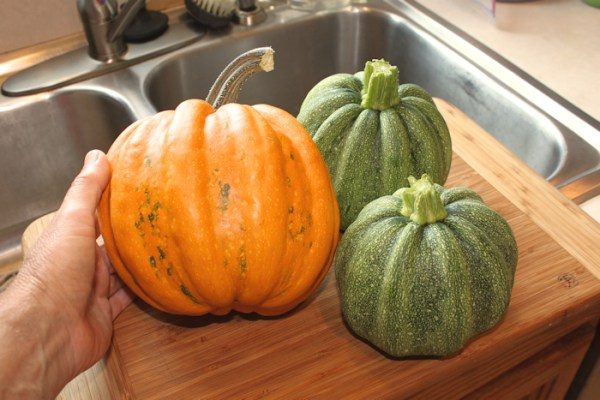 mature and young Kumi Kumi squash