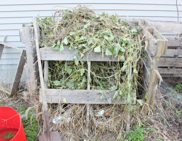 compost bin full of sweet potato vines