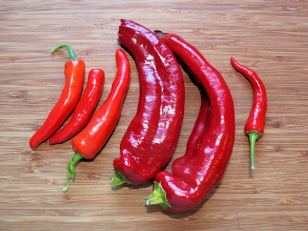 Anaheim and Cayennetta hot peppers for chili garlic sauce