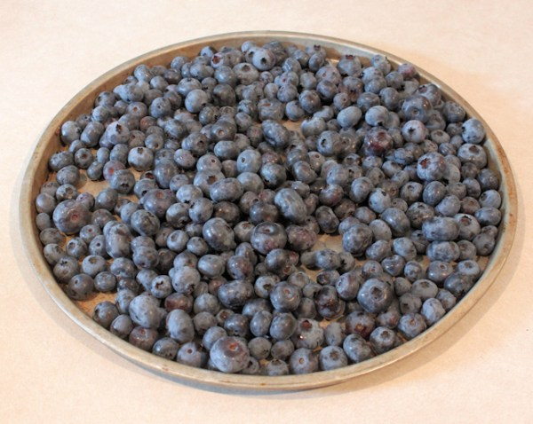 blueberries ready for eating or freezing