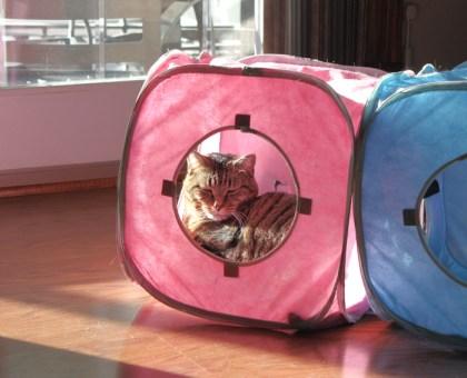 Puddin in cat cube