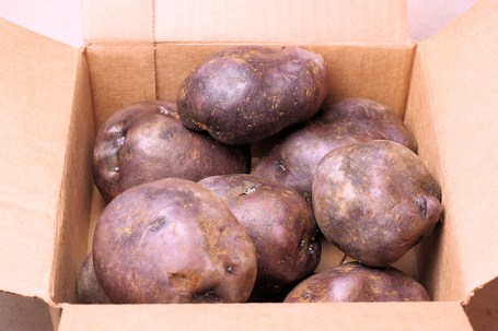 Adirondack Blue seed potatoes