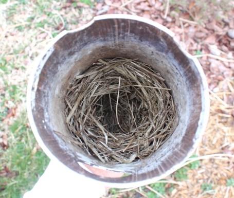 bluebird nest is ready for eggs