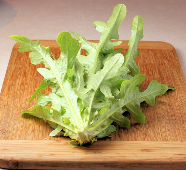 head of Radichetta lettuce