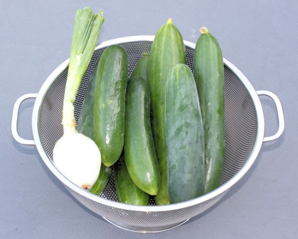 first cucumbers of 2014