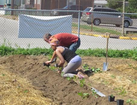 Kana and I are planting sweet potatoes