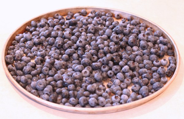 daily blueberry harvest