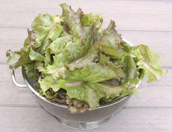 Red Sails leaf lettuce