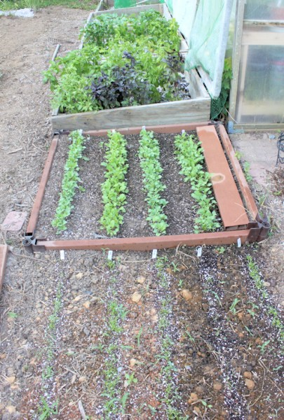 view of cold frame beds