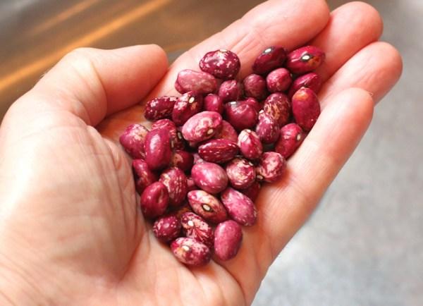 Whipple dry beans