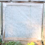 Cold Frame Winter Prep