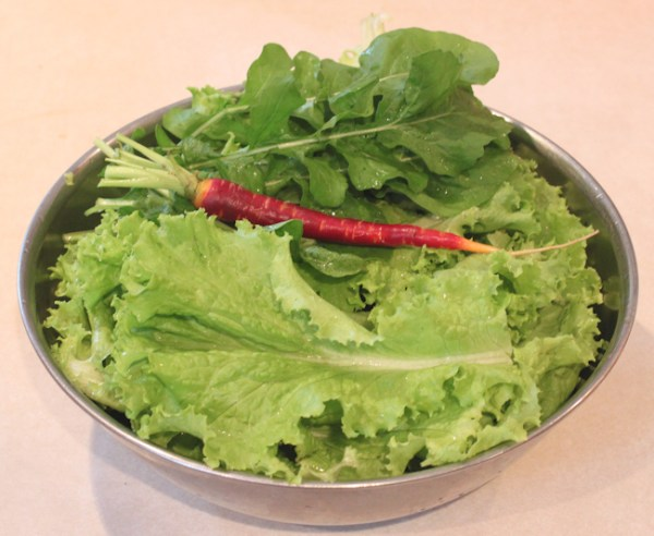 salad with Slobolt lettuce