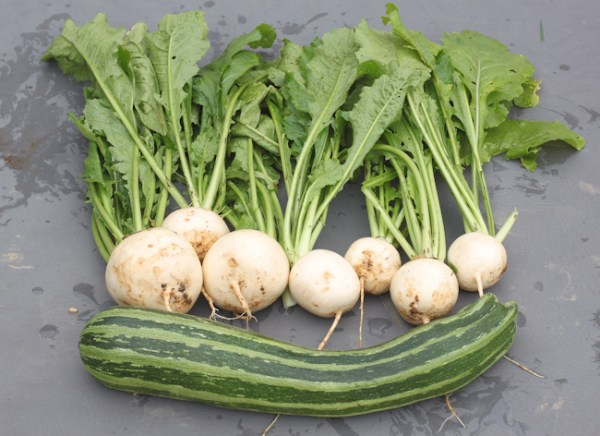white turnips and Striata d