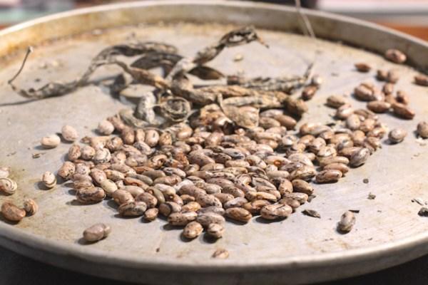 shelling Rattlesnake pole beans