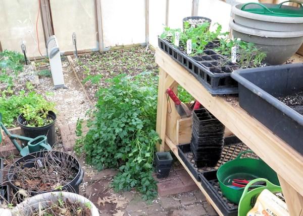 greenhouse in December