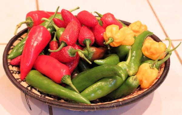 assortment of hot peppers for smoking