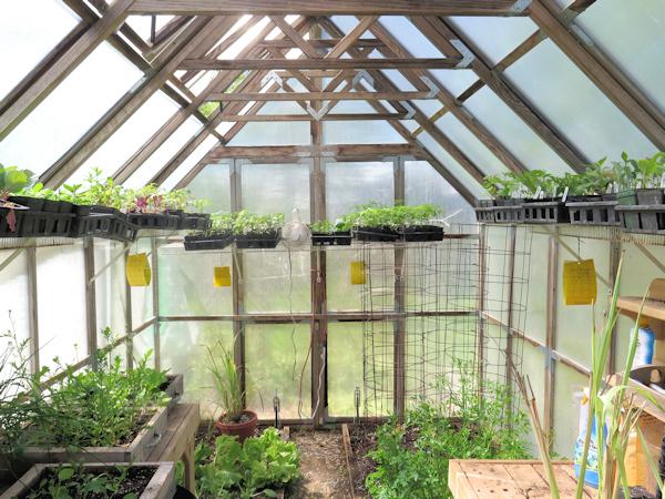 looking in the greenhouse door