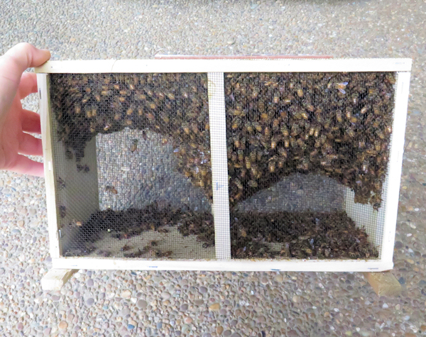 package of bees