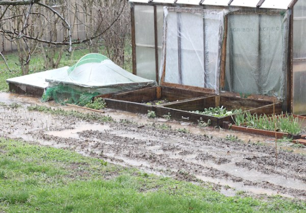 standing water on kitchen garden bed