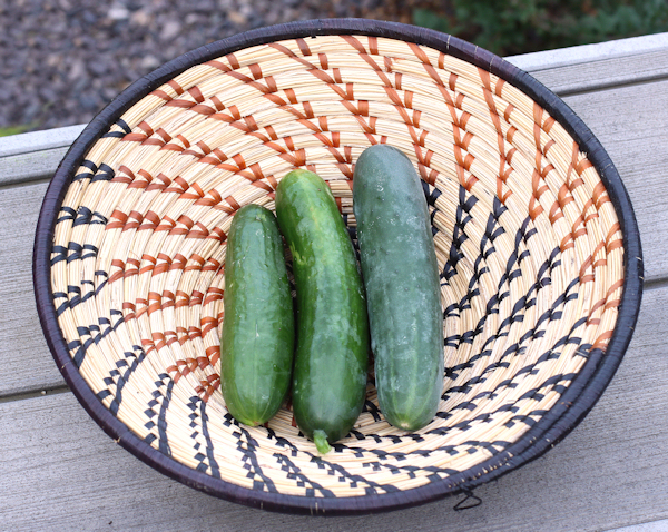 trio of cucumbers
