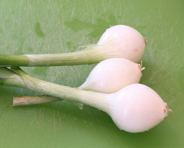 young onions