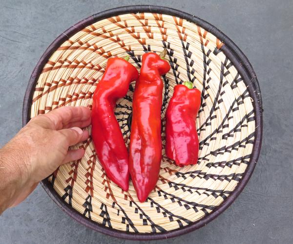 Corno di Toro Rosso peppers