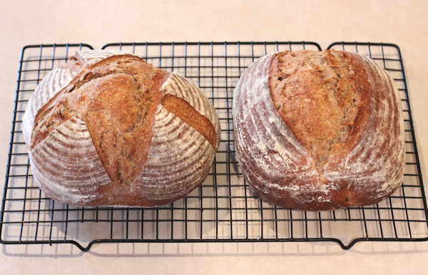 Sourdough Rye Hearth Bread