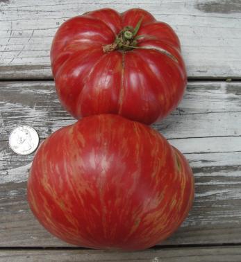Jazz Tomato