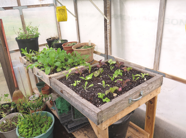 greenhouse table