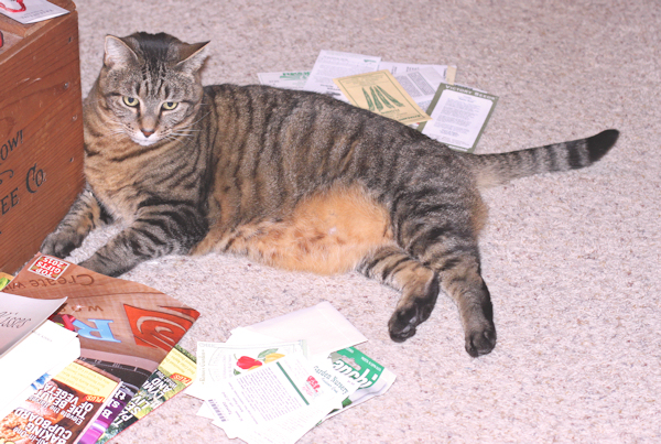 Puddin helping with seed inventory