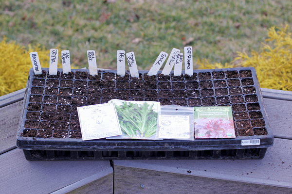 sowing lettuce in 128 cell plug flat