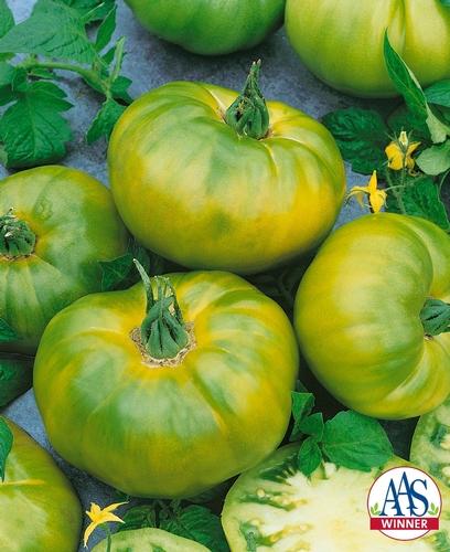 Tomato Chef's Choice Green