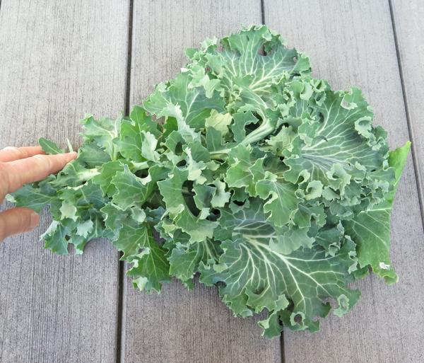 True Siberian kale
