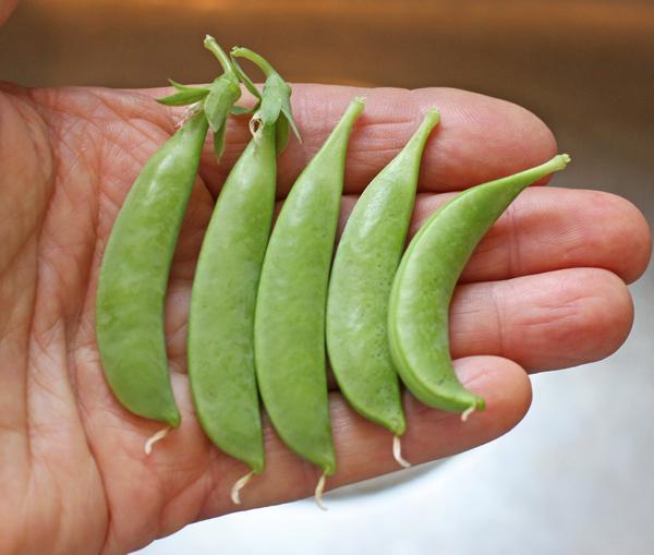 Sugar Ann snap peas