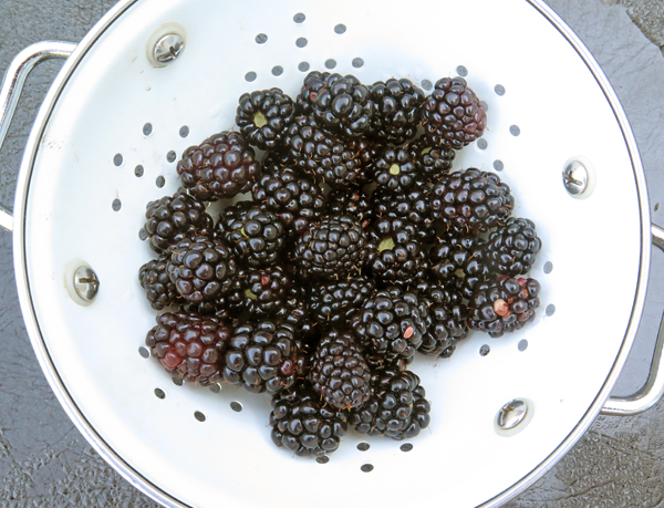 Natchez blackberries