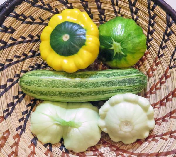 harvest of summer squash