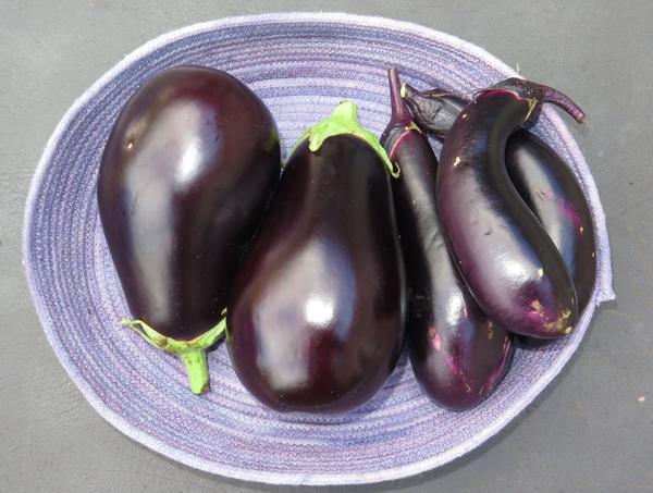 Galine and Millionaire eggplant