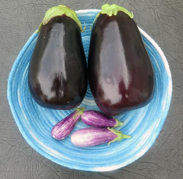 Galine and Fairy Tale eggplant