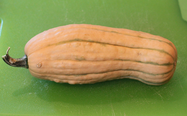 Honeyboat Delicata squash