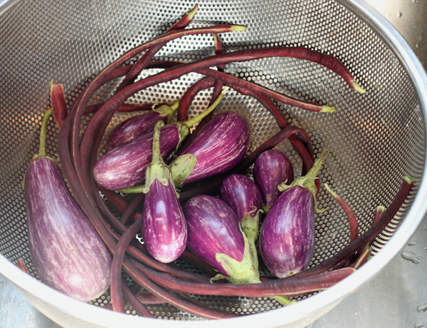 Red Noodle beans and Fairy Tale eggplant