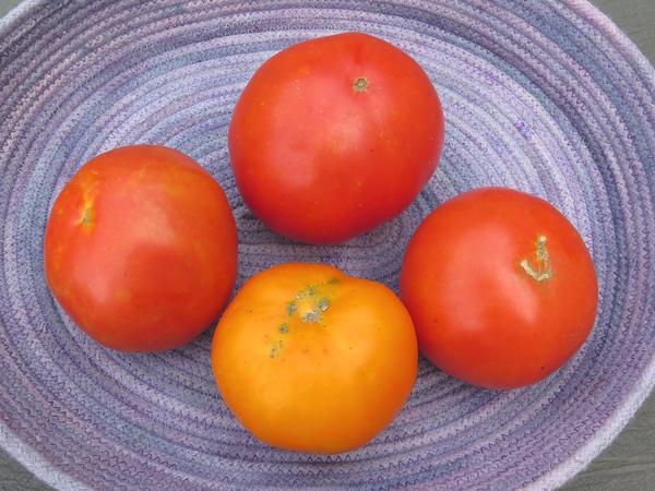 Garden Treasure and Chef's Choice Orange
